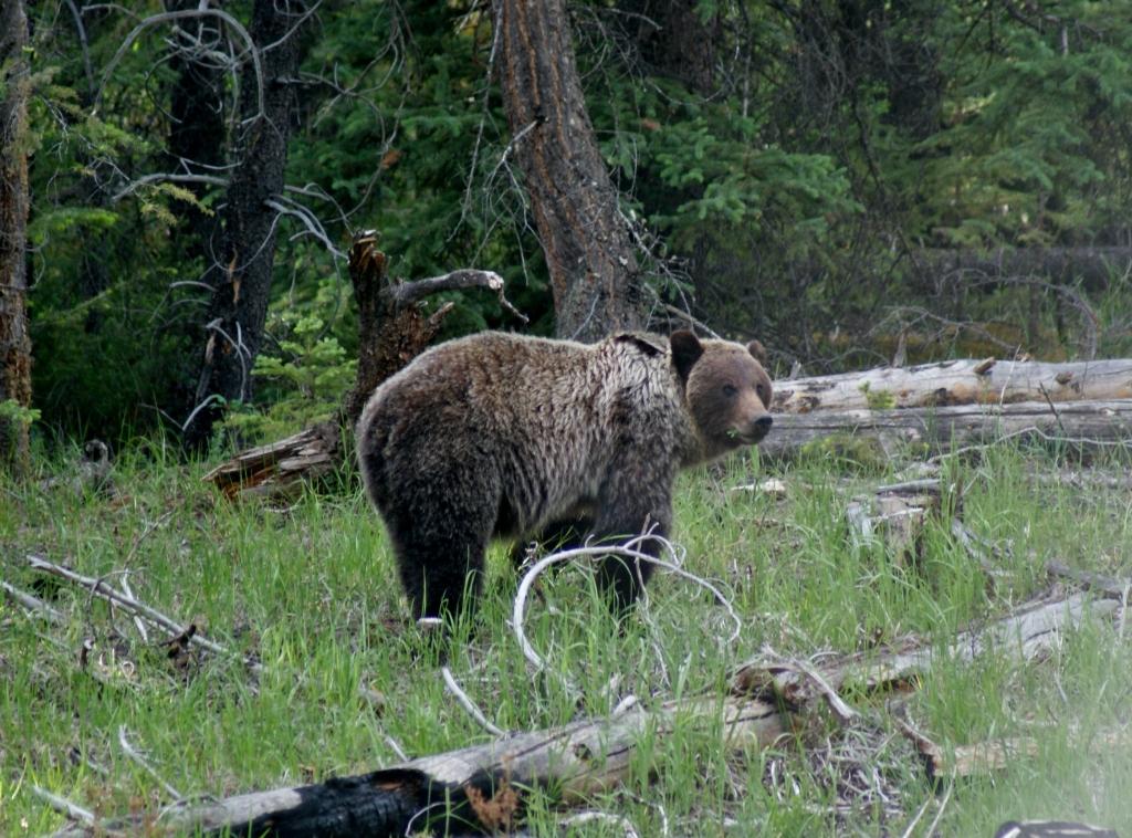 Canadian Rocky Mountans, wildlife, Banff